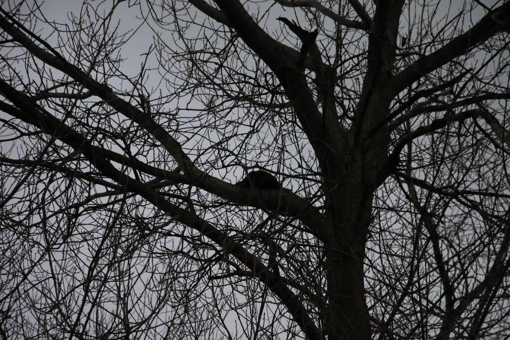 Brandweer red kat uit boom