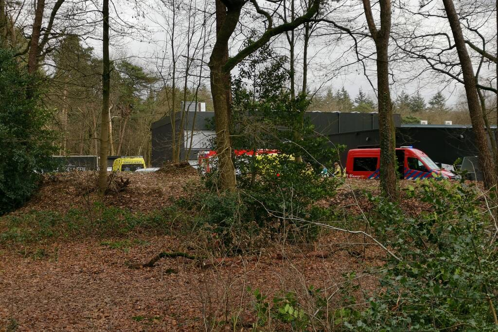 Boom op persoon gevallen in bosgebied