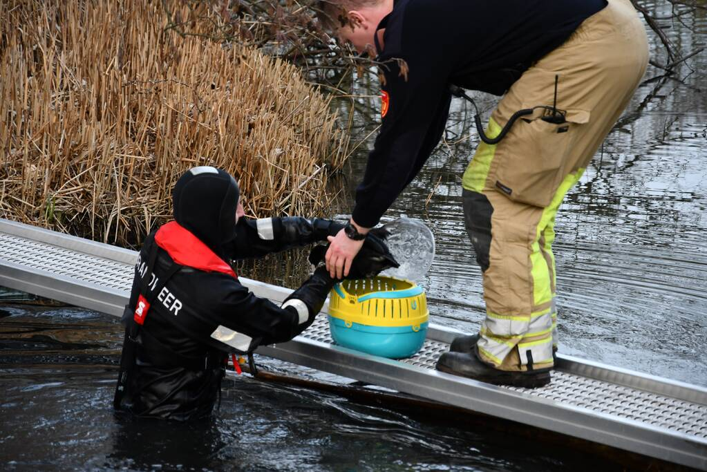 Meerkoet door brandweer gered