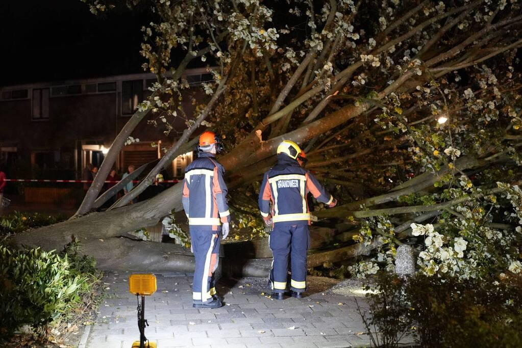 Grote boom valt over weg