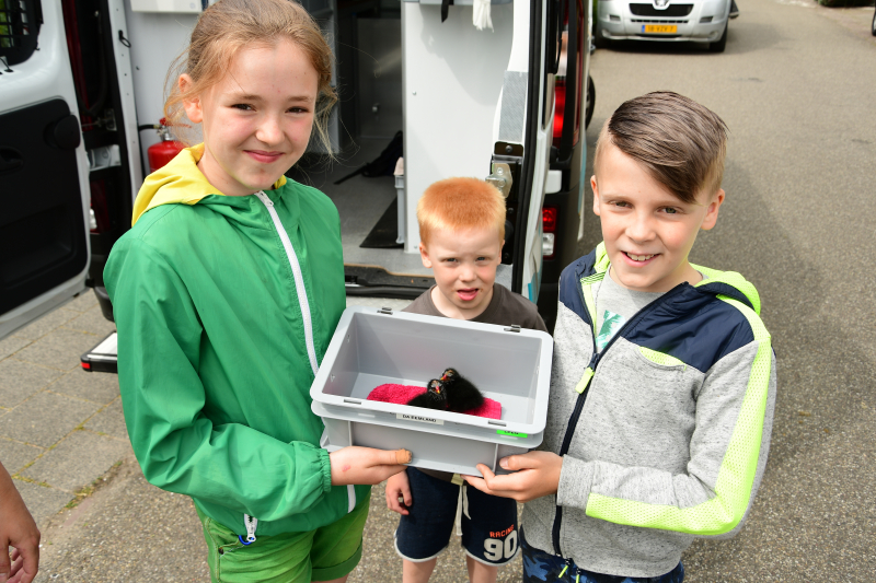 Bram (10) en Jamie (10) redden jonge meerkoetjes uit sloot
