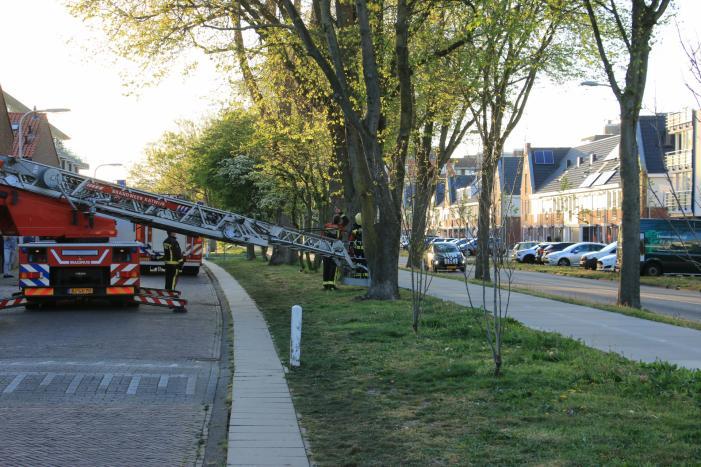 Brandweer verwijderd losse takken uit boom