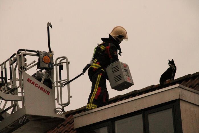 Brand redt kat van het dak