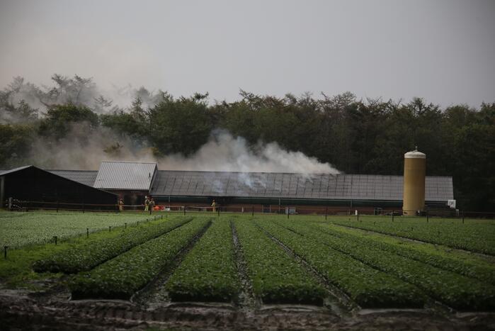 Grote brand in varkensstal gepaard met veel rook