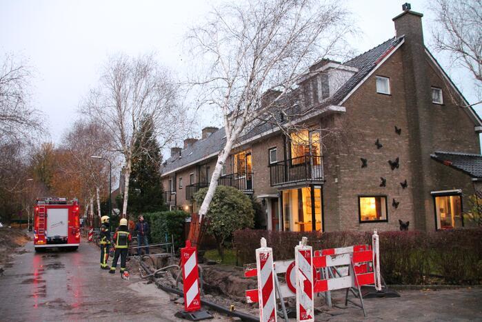 Bomen dreigen tegen woningen te vallen