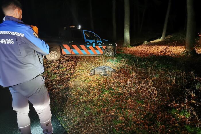 Wild zwijn overleden na aanrijding met auto