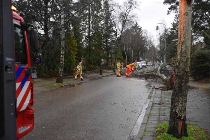 Omgewaaide boom blokkeert weg en sloopt lantaarnpaal