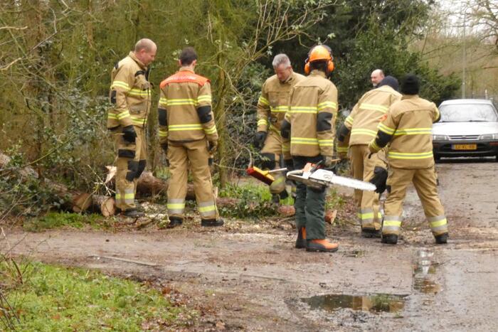 Brandweer zaagt omgewaaide boom in stukken