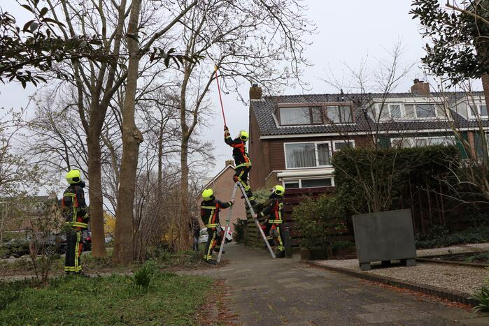Brandweer verwijderd los hangende tak