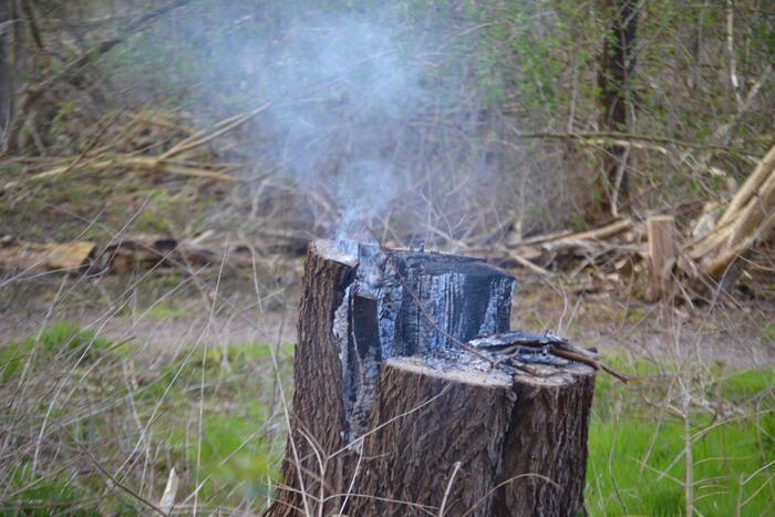 Brand in afgezaagde boom