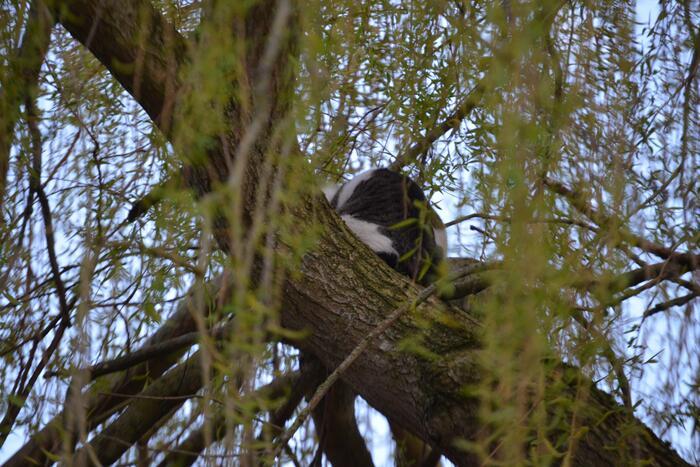 Kat vlucht boom in na beet van hond