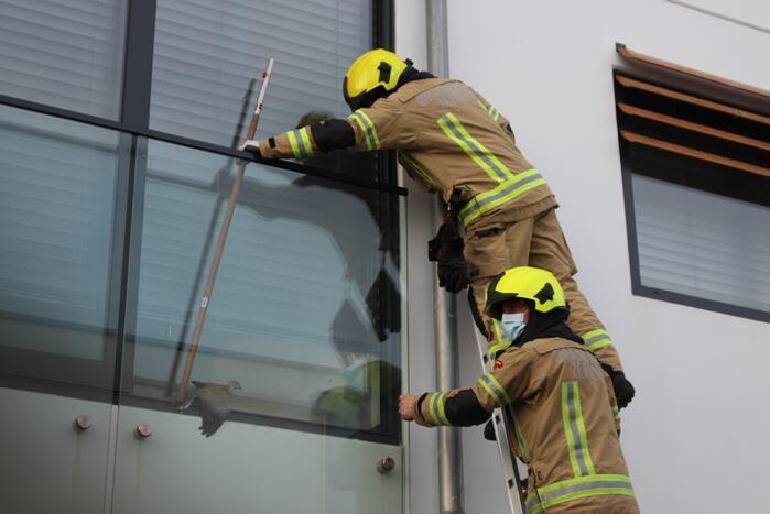Brandweer bevrijdt duif tussen raam en glasplaat
