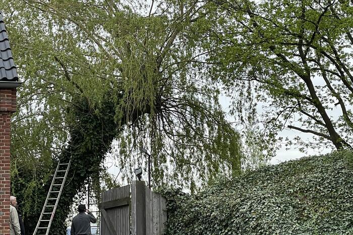 Hond vast boven in boom
