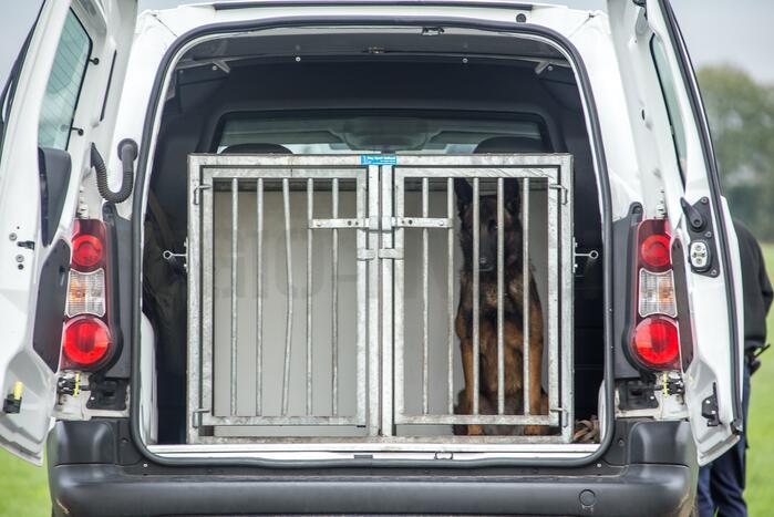Verwaarloosde honden aangetroffen