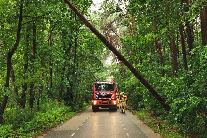 Brandweer haalt gevaarlijk hangende boom neer