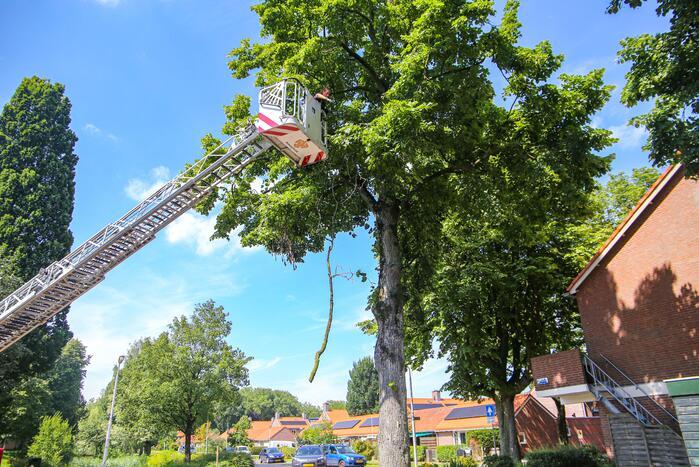 Brandweer verwijdert gevaarlijk hangende takken