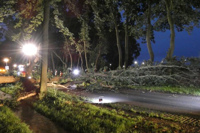Twee grote bomen vallen op weg