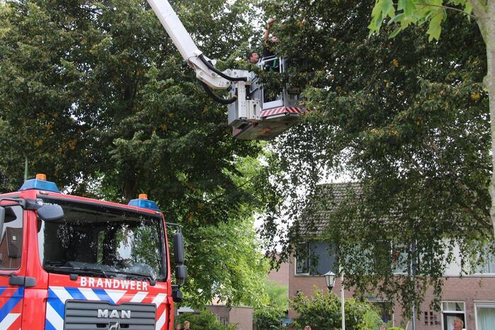Brandweer haalt papegaai uit boom