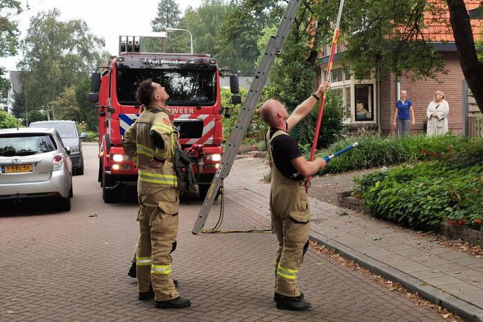 Kat kiest hazepad na reddingsactie brandweer