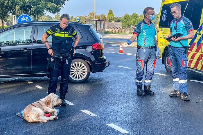 Hond gewond bij ongeval met twee auto's