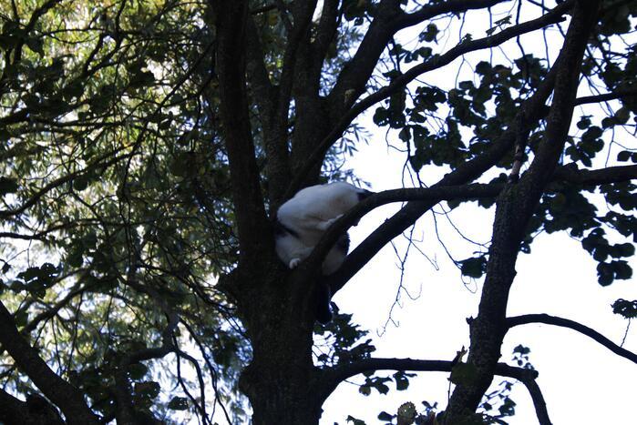 Brandweerman klimt boom in om kat te bevrijden